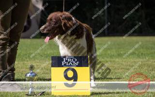 Max Best in Show 9e plaats!